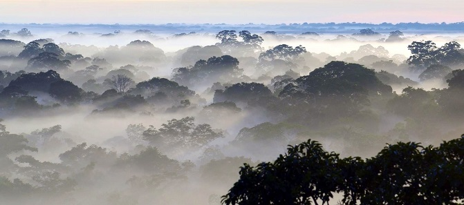 Peru trees with fog